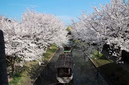 十石舟と桜-1(20180327).jpg