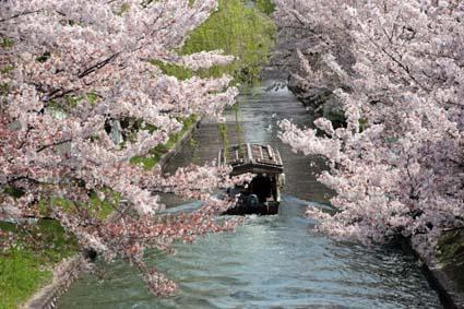 十石舟と桜まつり-2(20180401).jpg