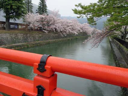 岡崎の桜-1(20190414).jpg