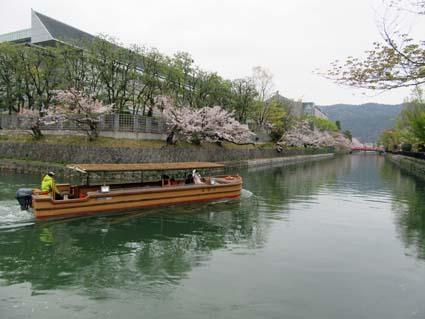 岡崎の桜-3(20190414).jpg