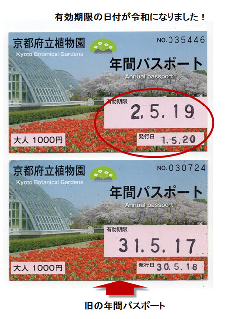 年間パスポート(20190520)ブログ.jpg