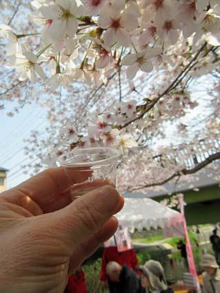 桜まつりポスター-3.jpg