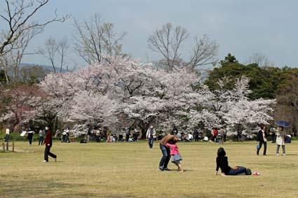 桜狂宴-2(20190406).jpg