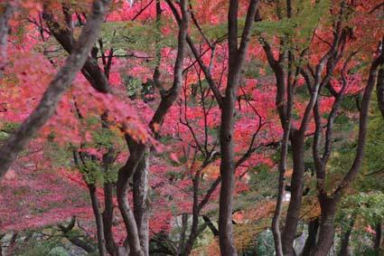 植物園の紅葉-1(20181123).jpg