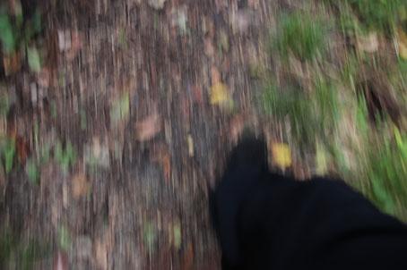 歩く(20191021).jpg