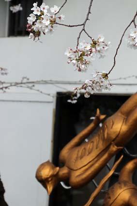 河童と桜-3(20190405).jpg