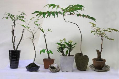 盆栽たち-1(20190518).jpg