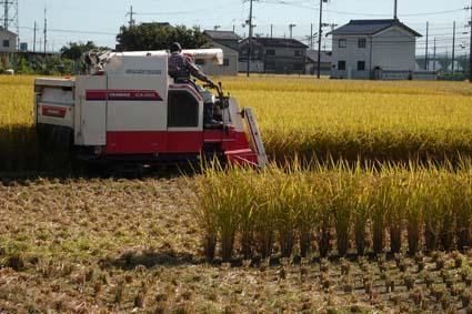 稲刈り-4(20191009).jpg
