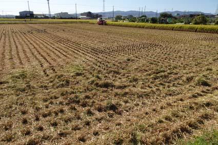 稲刈り-5(20191009).jpg