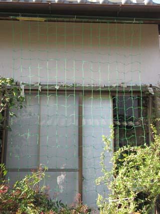 緑のカーテン-1(20190420).jpg