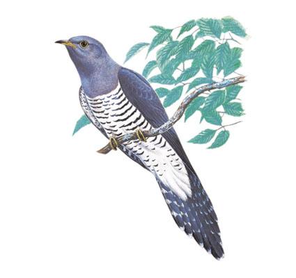 鳥のホトトギス(ブログ用).jpg